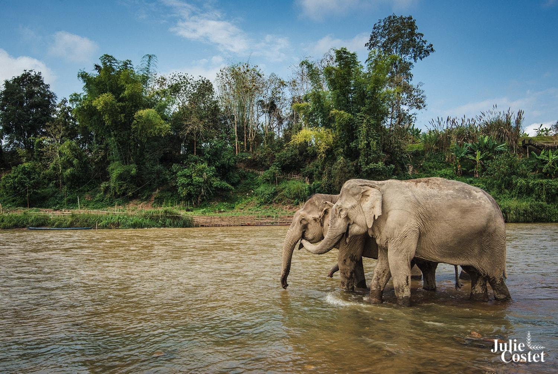 Elephants au Laos, Mandalao